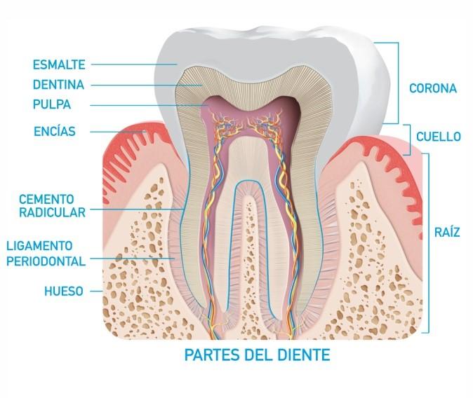 sensibilidad_dental